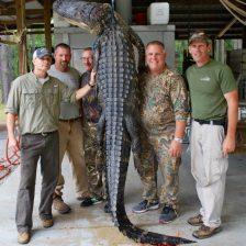 2016 Aligator Hunt 002