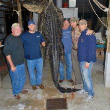 2016 Aligator Hunt 005
