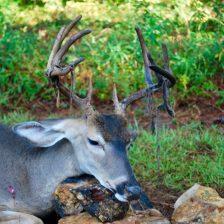 2016 Deer Harvest 014