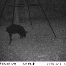 2018 Trail Camera 002